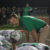 Buckaroos defeat Ponder, clinch playoff berth