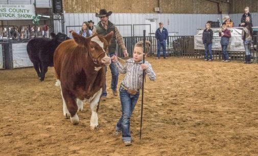 Kadynce Kennedy claims cattle category awards