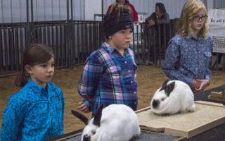 SCJLS-Rabbit Division