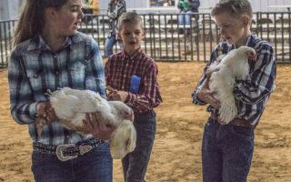 SCJLS-Poultry Division