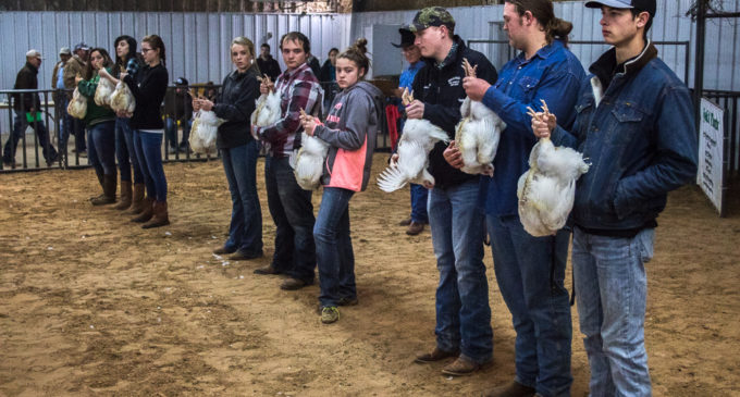 Cantrell takes home top honors in SCJLS Poultry Division