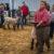 SCJLS-Sheep Division
