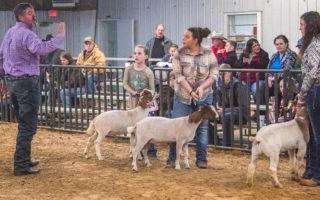 SCJLS-Goat Division