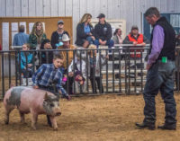 SCJLS Swine Division has large turnout