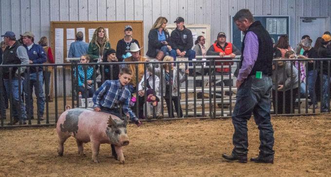 SCJLS Swine Division has large turnout