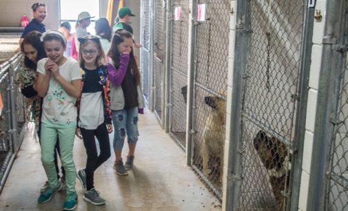 City of Breckenridge considers closing Senior Citizens Center, Animal Shelter in June