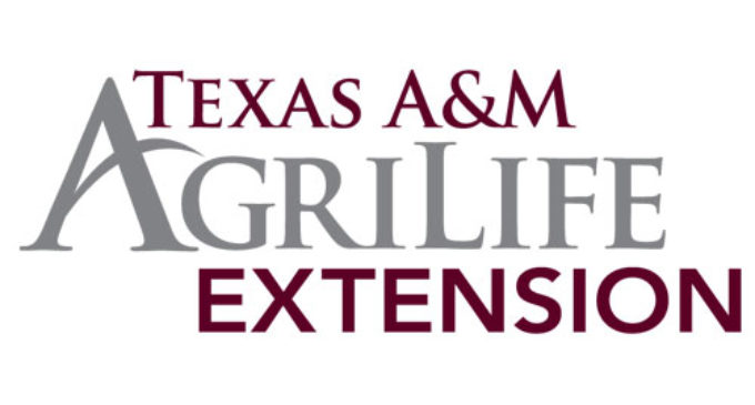 AgriLife Extension to offer kids summer workshops