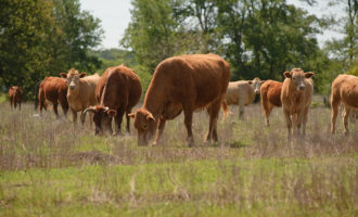 Local ranchers, farmers identify biggest conservation resource concerns for USDA
