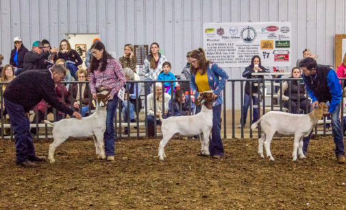 Caroline Turner, Morgan Robertson take home top goat awards