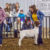 2019 SCJLS – Goat Division