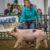 2019 SCJLS – Swine Division