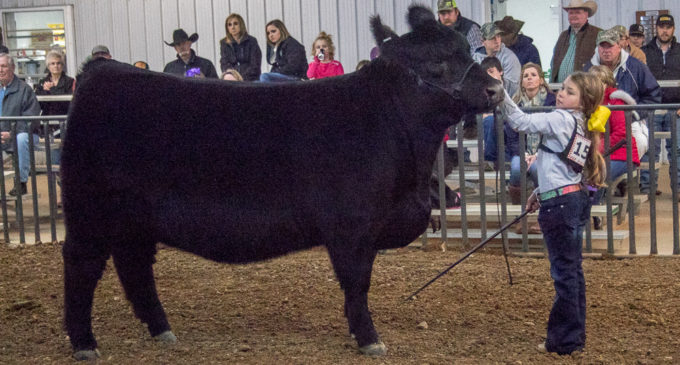 State cattle validation set for Saturday, June 29, for 2019-2020 major shows