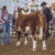 2019 SCJLS – Cattle Division