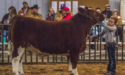 Annual Livestock Show to kickoff Thursday