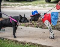 Pet Parade showcases Breckenridge's best dogs