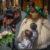 Buckaroo Queen Coronation 2020