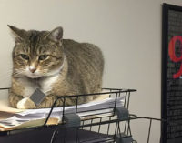 Tammy the Cat is missing from the Breckenridge Police Department