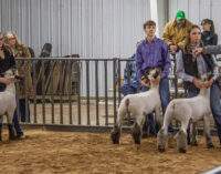 SCJLS: Kason Knight, Addison Street garner top awards in Sheep Division