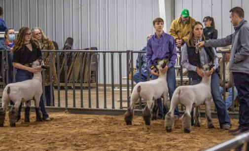 SCJLS: Kason Knight, Addison Street garner top awards in Sheep Division