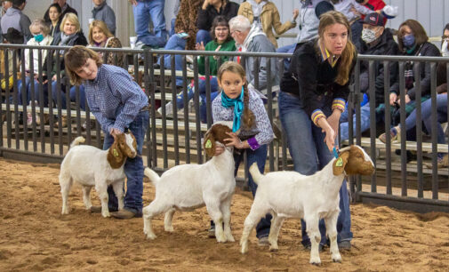 SCJLS: Top honors in Goat Division go to Olyvia Perez, Addison Duncan and Caroline Turner