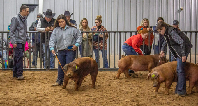 SCJLS: Addison Duncan, Caiden Gonzales take home top Swine Division awards