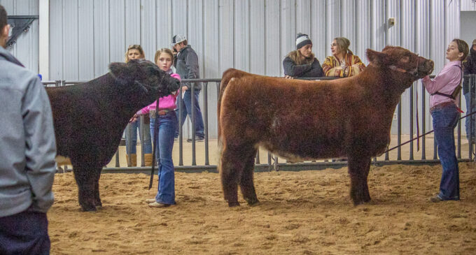 SCJLS: KayLee Langford, Kadynce Kennedy earn top awards in Cattle Division
