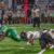 Buckaroos vs. Loboes in Pictures