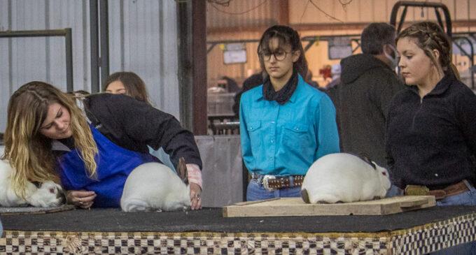 SCJLS: Kayla Wood, Magdalynn Paul, Cabel Perkins take top honors in Rabbit Division